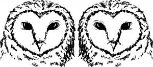 120228.owl.fullsize